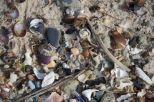 Beach finds, Penguin Island