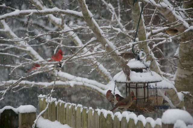 birds at feeder 11
