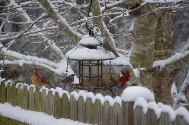 birds at feeder 9