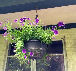 Hanging purple