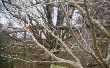 Cardinals 1