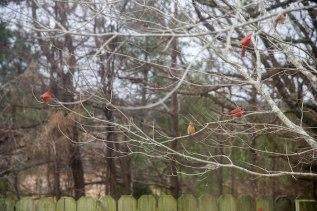 Cardinals 4