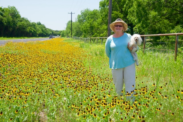 Dawn and Rosie in Black-eyed Susans