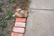 brick border 3