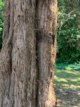 bark close-2