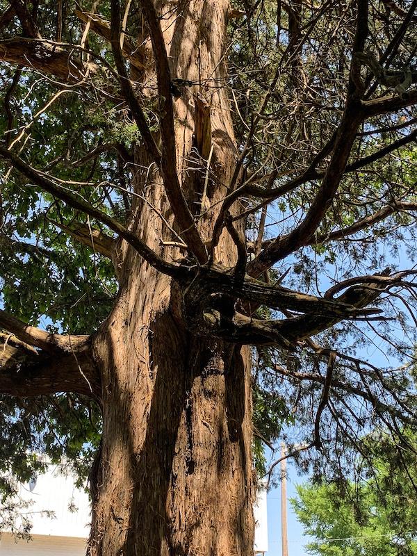 tree limbs-2