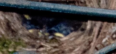 baby bird heads