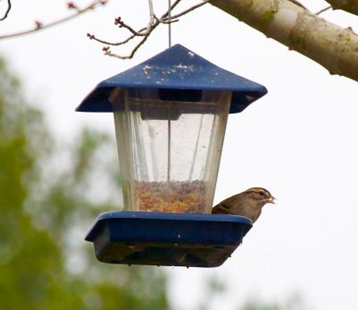 bird with seed