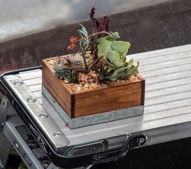 cacti (1)