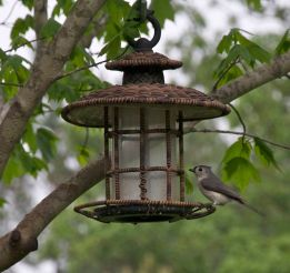 gray bird 2