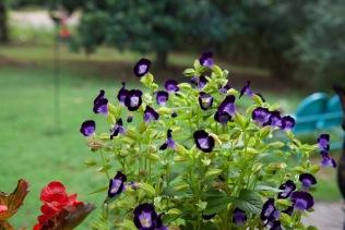 red purple violet teal