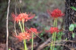 red flowers-2