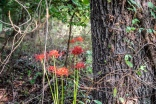 red flowers-4