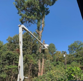 taking down the trees